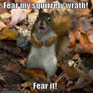 Funny-squirrel