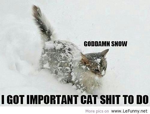 Goddamn-snow
