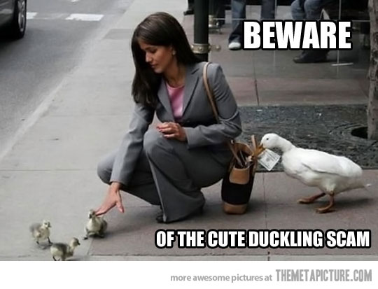 funny-duck-stealing-money-purse