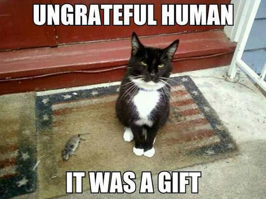 funny_cat_gift_mouse_ungrateful