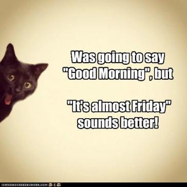 Almost-Friday-Cat-Meme-16