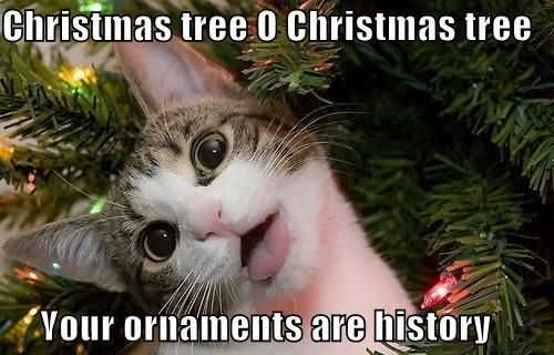 christmas-tree-0-christmas-tree-your-ornaments-are-history-tree-quote