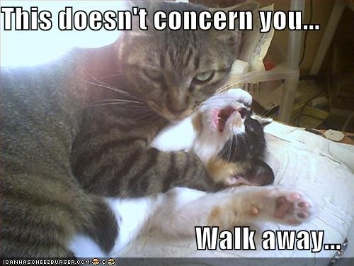 funny_pictures_cat_strangles_cat