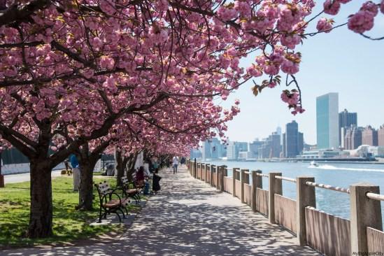 Spring-in-NYC-4.jpg