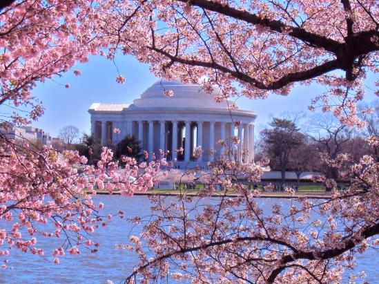 Washington-D.C.-Cherry-Blossoms
