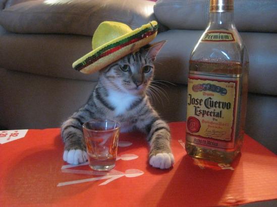 tequila-cat