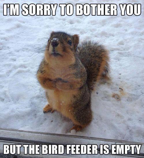 Squirrel_Bird_Feeder_Funny_Meme.jpg