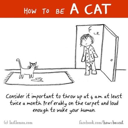 How-To-Be-A-Cat-2