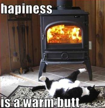 funny-animal-1-happiness-is-a-warm-butt