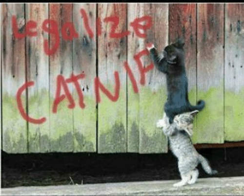 legalize-catnip-cats-spray-painting-fence